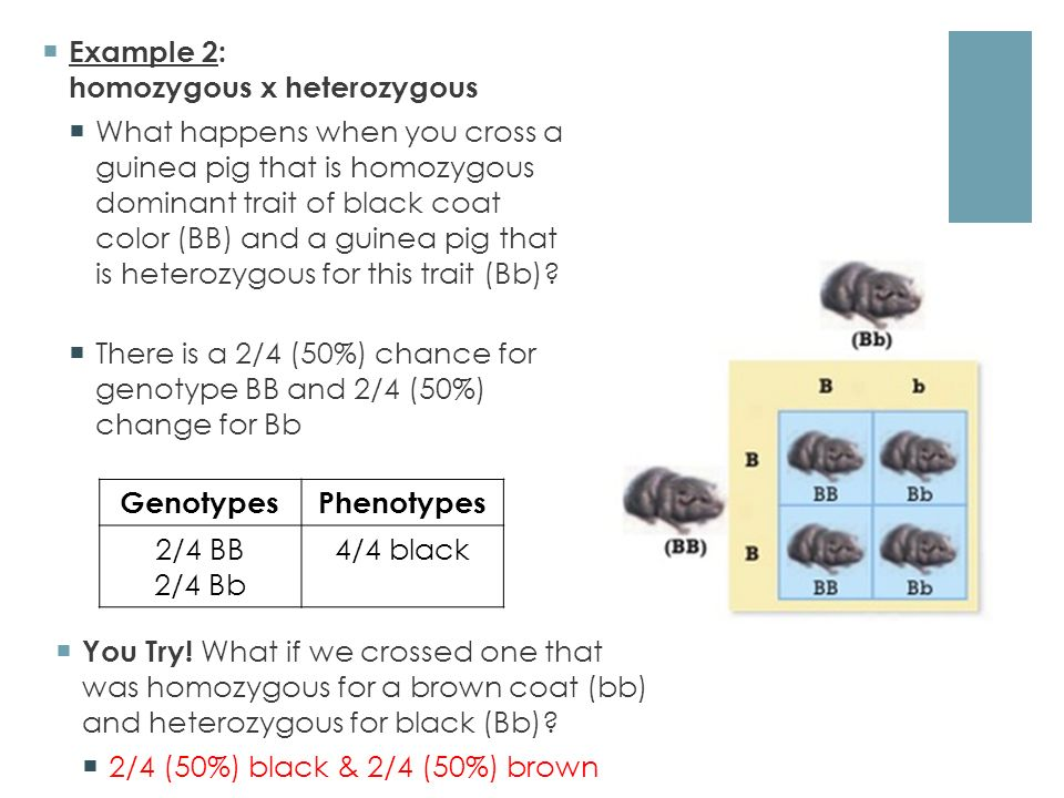 Genetic Crosses. Homozygous vs. Heterozygous  Recall:  Alleles ...