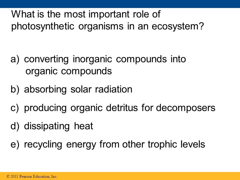 What is the most important role of photosynthetic organisms in an ecosystem.