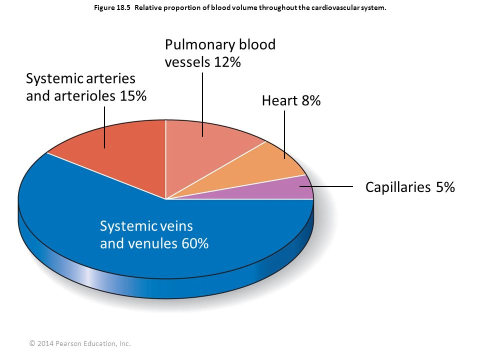 © 2014 Pearson Education, Inc. Figure 18.5 Relative proportion of blood volume throughout the cardiovascular system. Pulmonary blood vessels 12% Syste