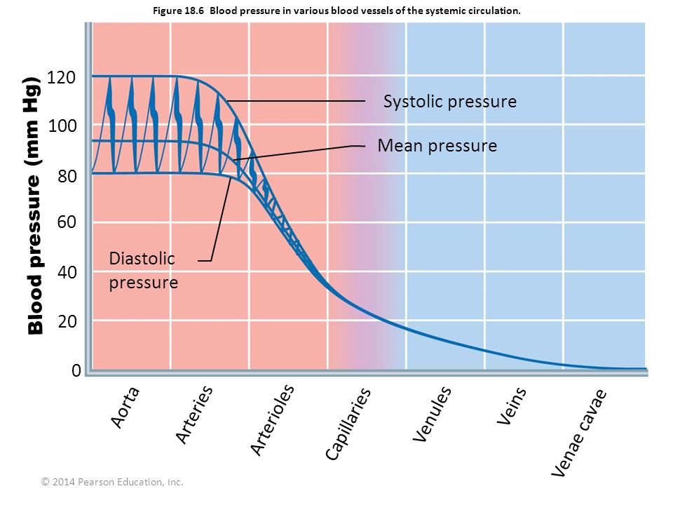 © 2014 Pearson Education, Inc. Figure 18.6 Blood pressure in various blood vessels of the systemic circulation. Systolic pressure Mean pressure Diasto