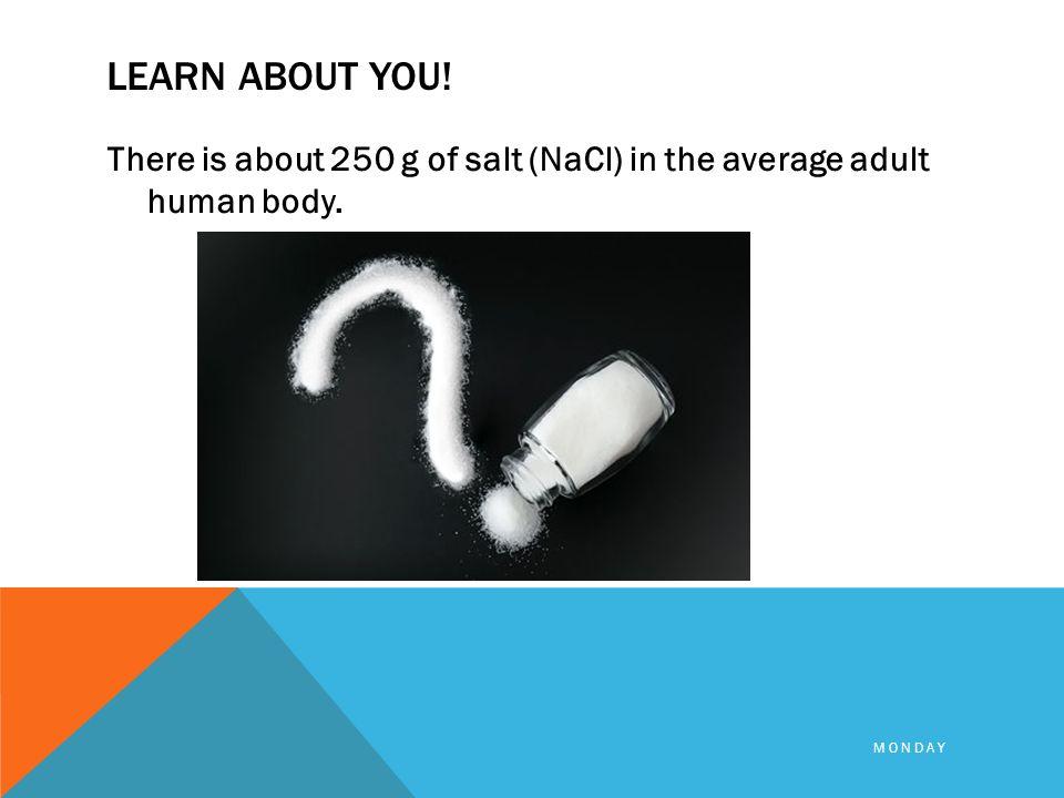 average-adult-human