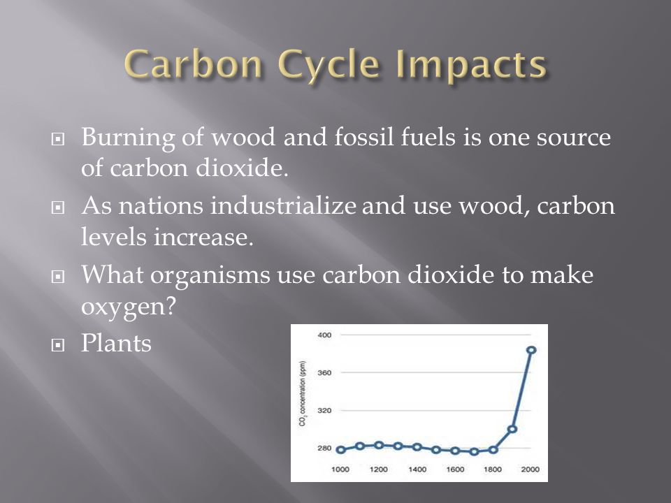  Burning of wood and fossil fuels is one source of carbon dioxide.