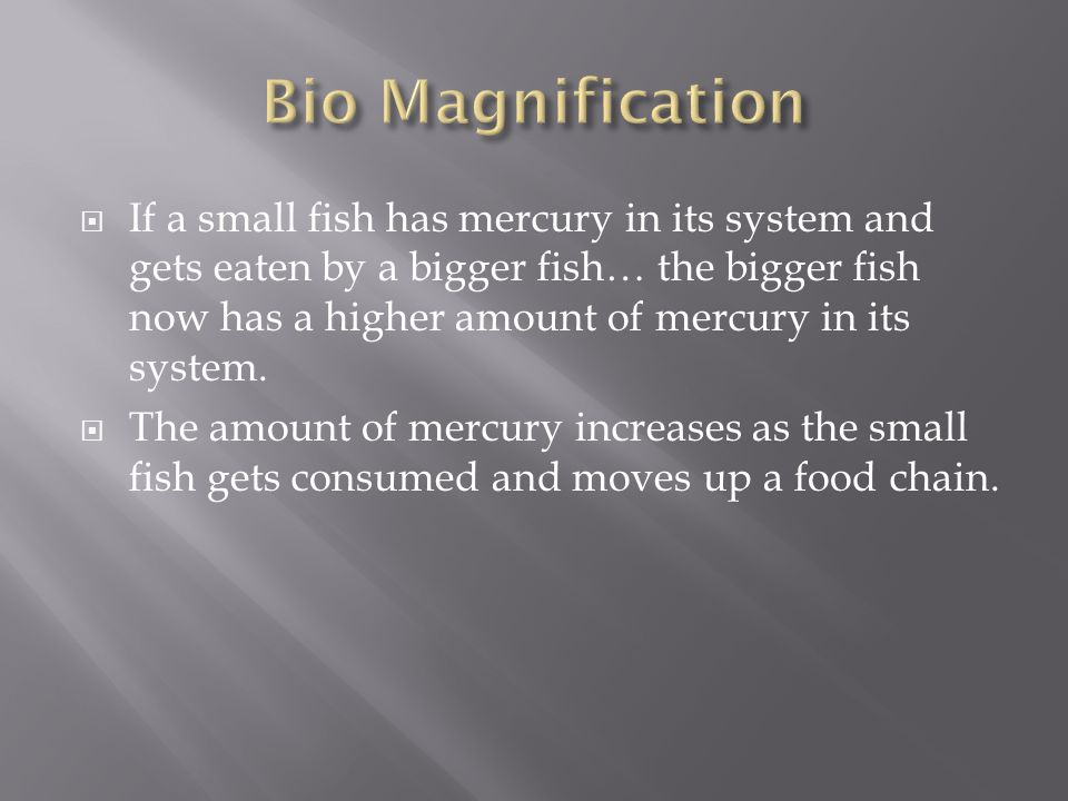  If a small fish has mercury in its system and gets eaten by a bigger fish… the bigger fish now has a higher amount of mercury in its system.
