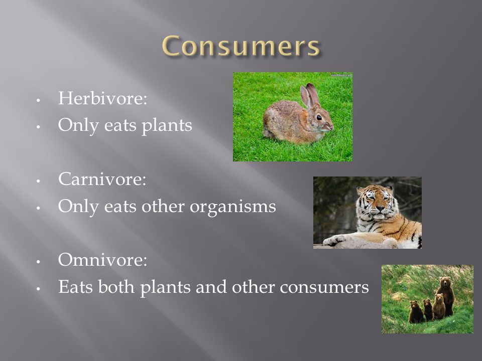 Herbivore: Only eats plants Carnivore: Only eats other organisms Omnivore: Eats both plants and other consumers