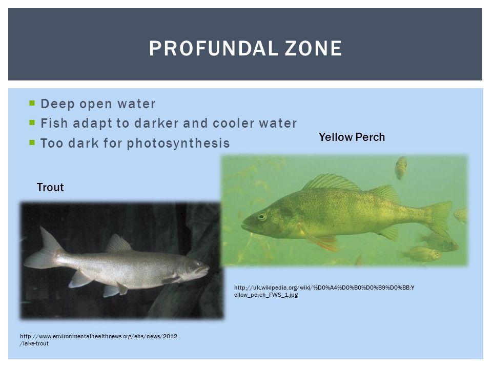 green zone wiki