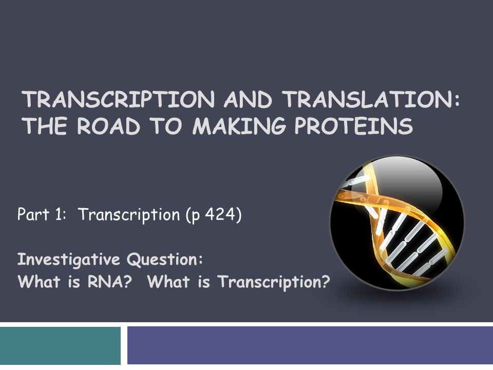 Transcription and translation the road to making proteins part 1 1 transcription malvernweather Choice Image