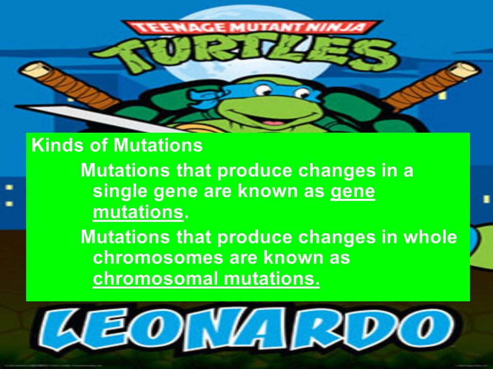 Kinds of Mutations Mutations that produce changes in a single gene are known as gene mutations.