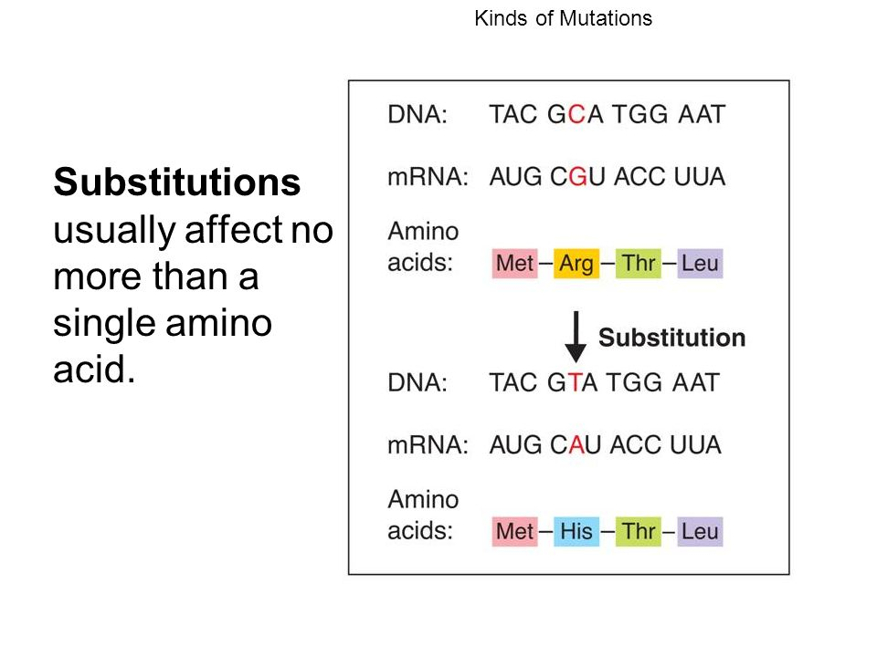 Kinds of Mutations Substitutions usually affect no more than a single amino acid.