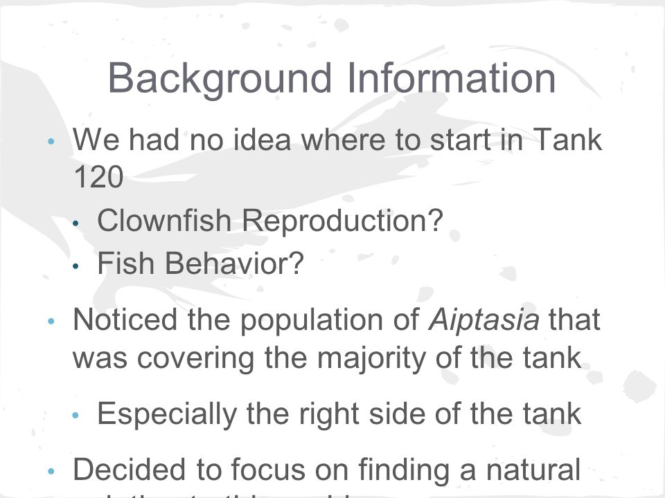 Aiptasia pallida Depletion in Tank 120 with Help from Natural ...