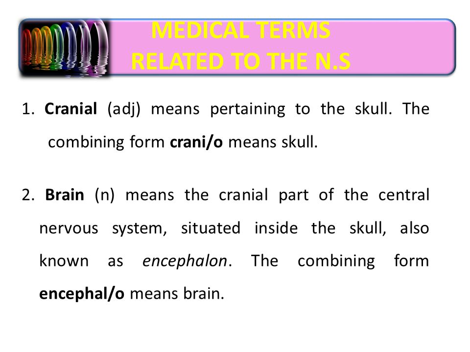 Foundation year Nervous system MEDICAL TERMINOLOGY T. SANAA ABD ...