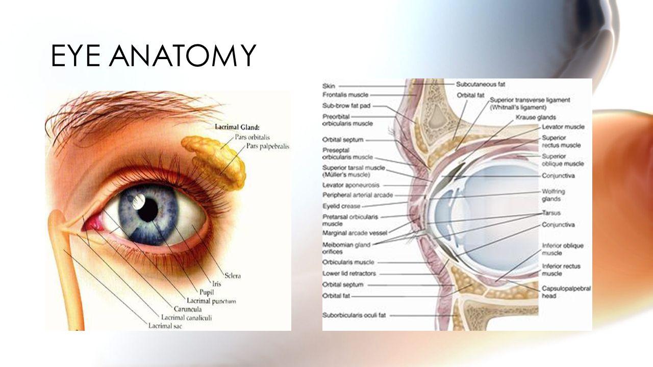 Eye anatomy limbus 9166338 - follow4more.info