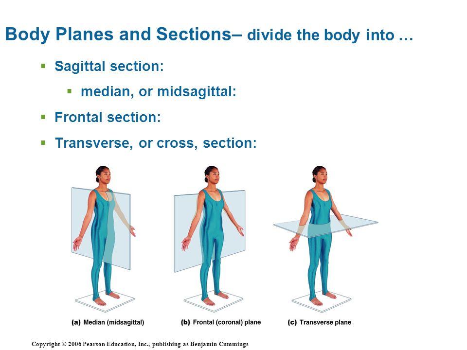 Ausgezeichnet Openstax Anatomy And Physiology Textbook ...