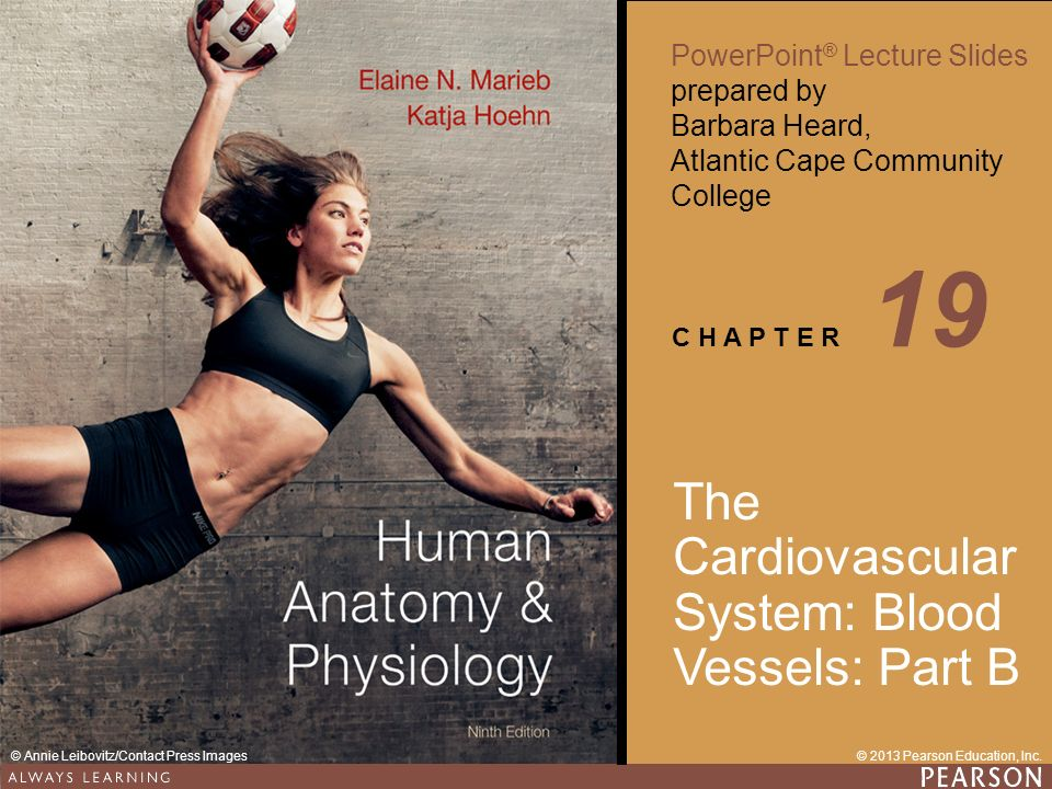 Human Anatomy & Physiology Ninth Edition PowerPoint ® Lecture Slides ...
