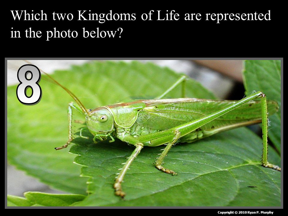 Which two Kingdoms of Life are represented in the photo below Copyright © 2010 Ryan P. Murphy