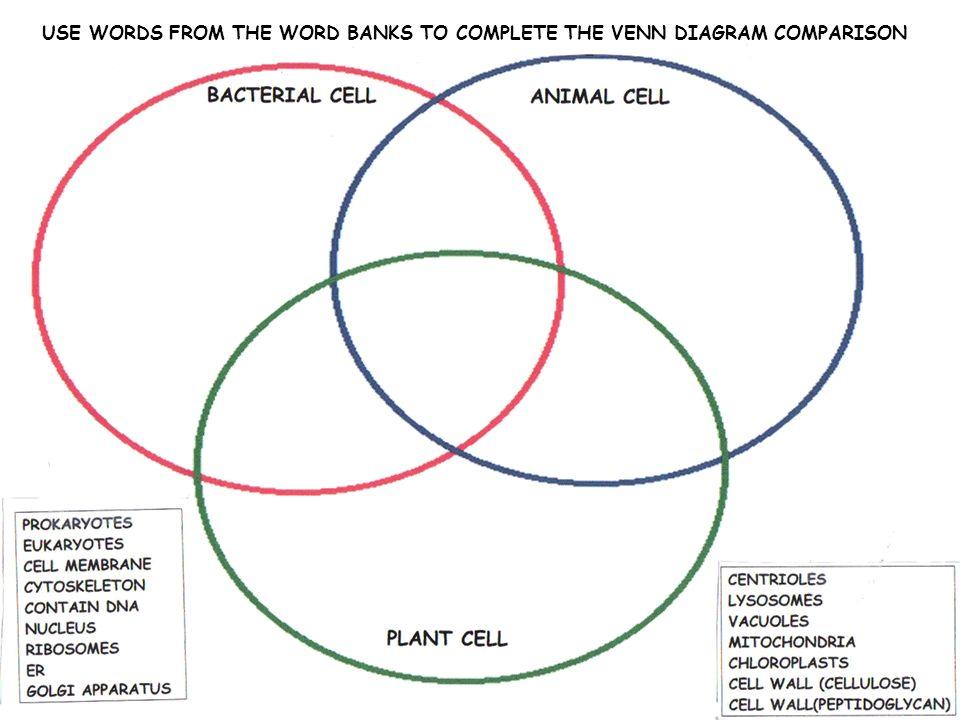 Plant vs animal cell venn diagram vatozozdevelopment plant ccuart Images