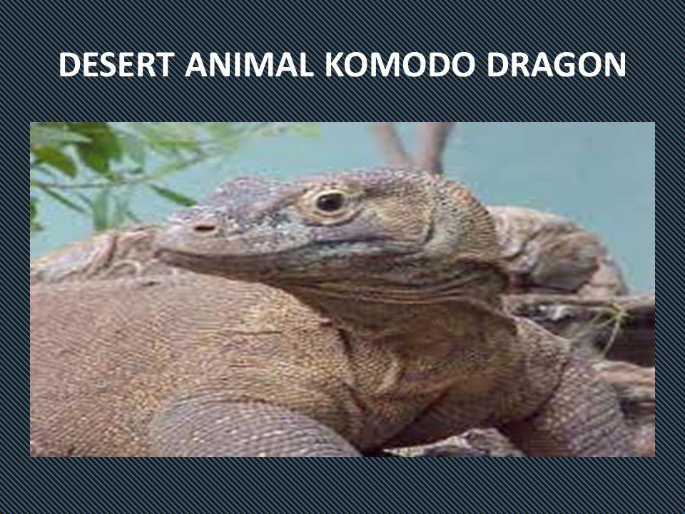 DESERT ANIMAL KOMODO DRAGON