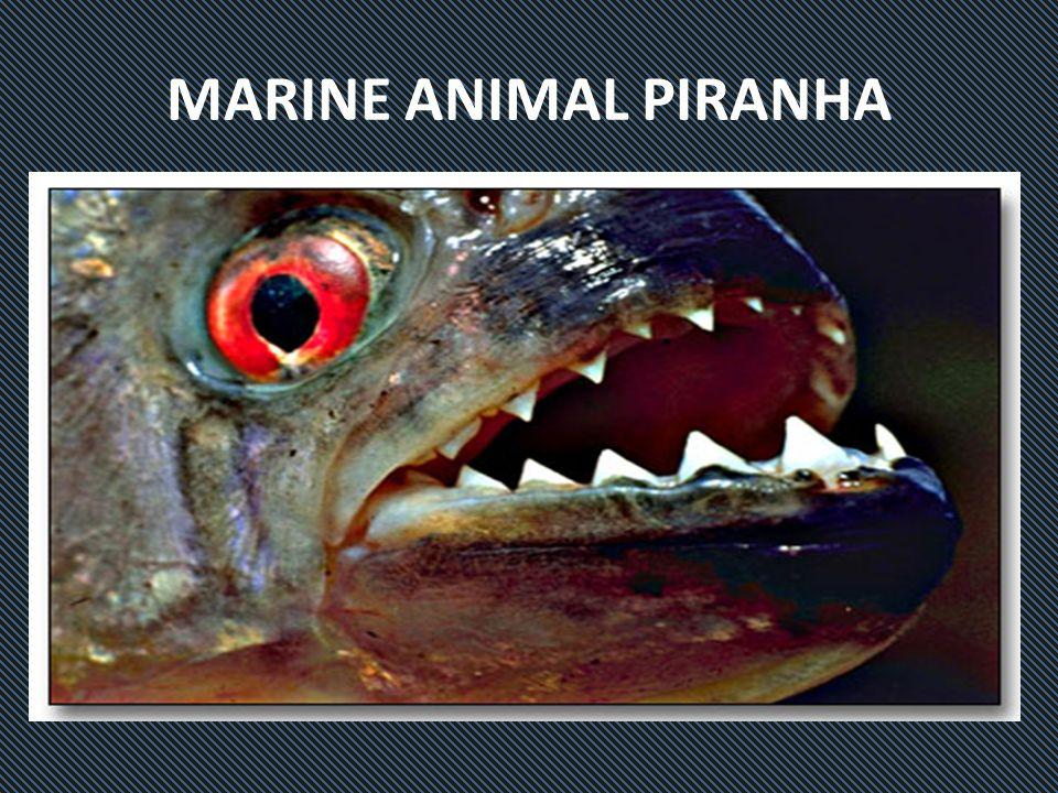 MARINE ANIMAL PIRANHA
