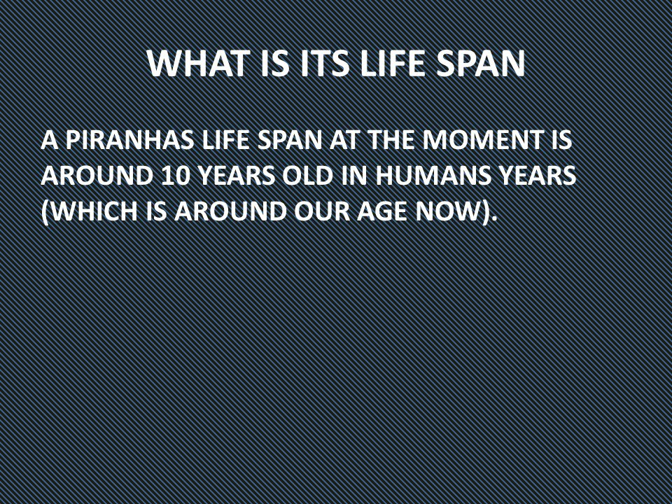 WHAT IS ITS LIFE SPAN A PIRANHAS LIFE SPAN AT THE MOMENT IS AROUND 10 YEARS OLD IN HUMANS YEARS (WHICH IS AROUND OUR AGE NOW).