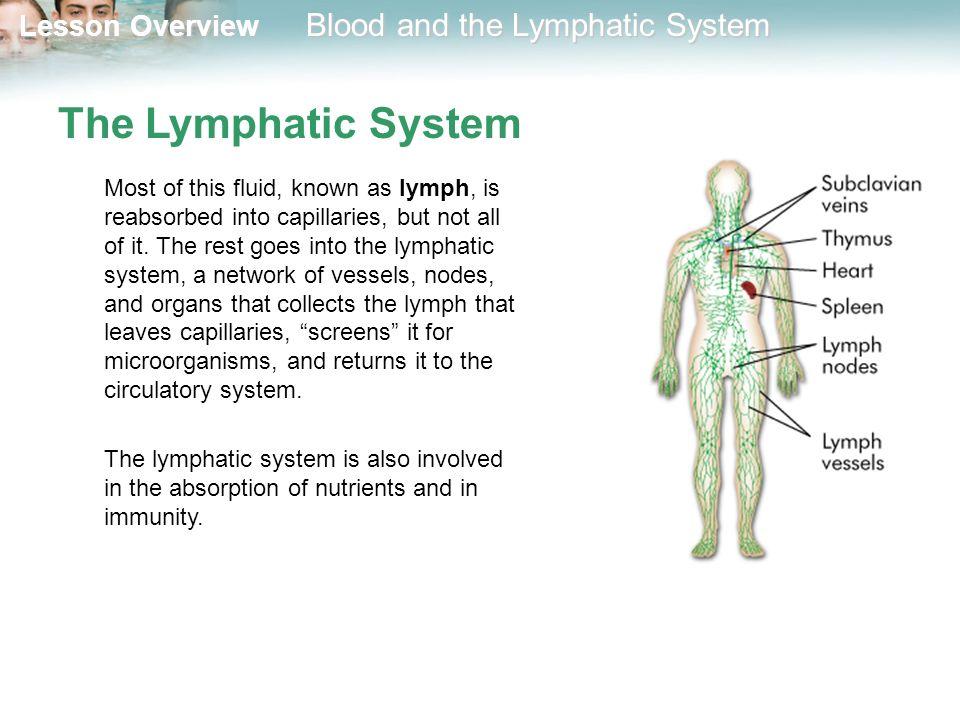 Tolle Lymphsystem Bilder Diagramme Fotos - Anatomie Ideen - finotti.info
