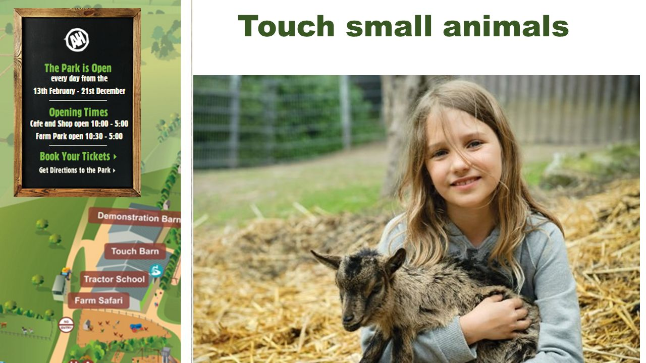 Touch small animals