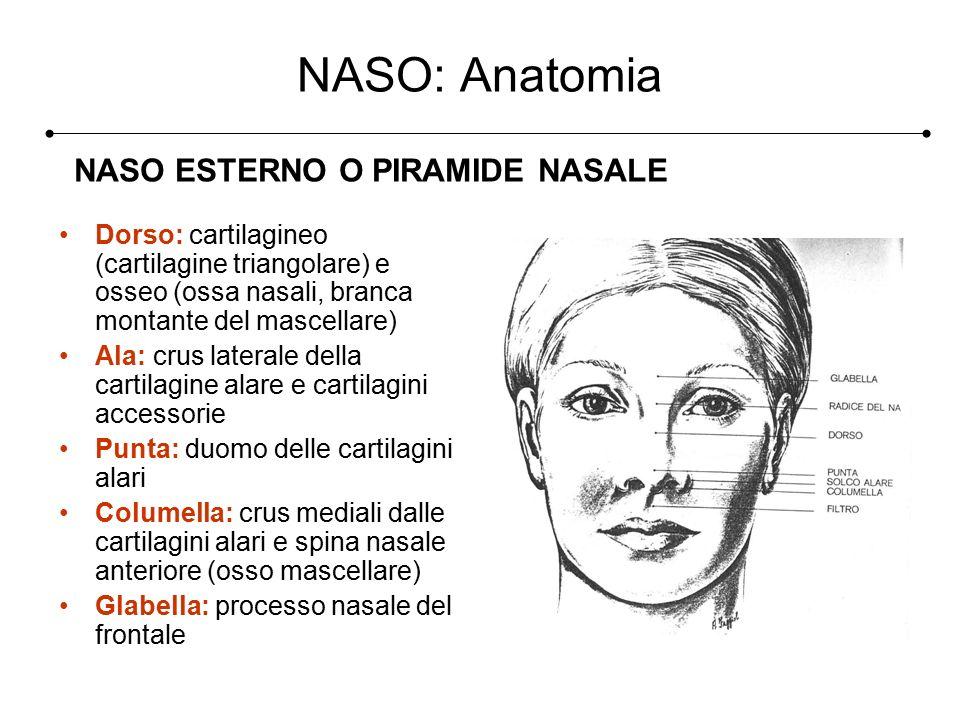 Beste Nasale Atemwegs Anatomie Bilder - Anatomie Von Menschlichen ...