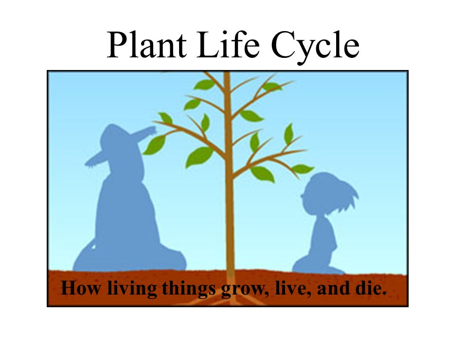 Plant Life Cycle How living things grow, live, and die.