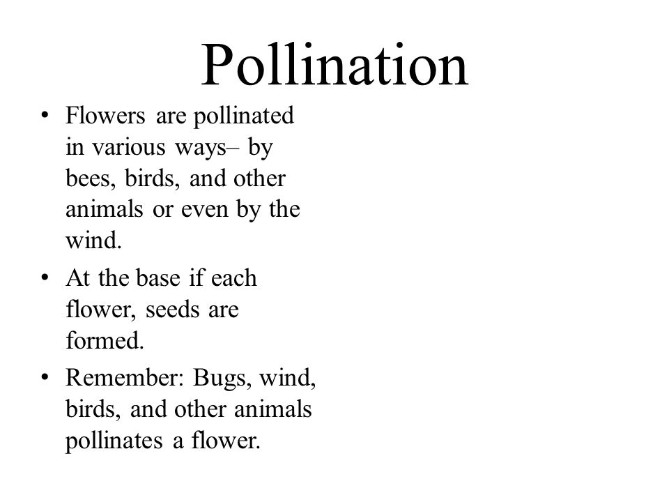 Pollination Flowers are pollinated in various ways– by bees, birds, and other animals or even by the wind.