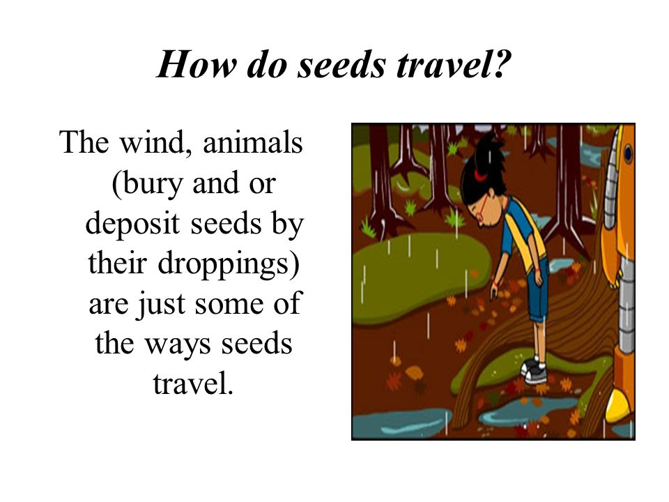 How do seeds travel.