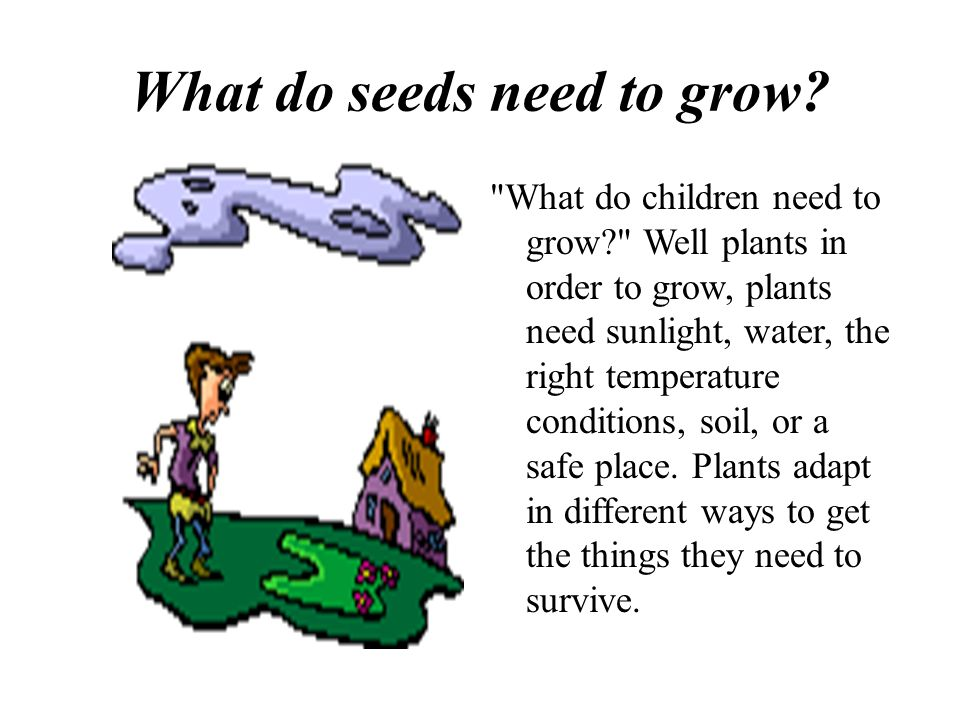 What do seeds need to grow.