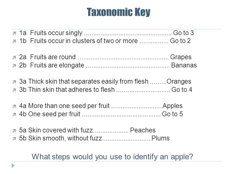 Taxonomic Key  1a Fruits occur singly