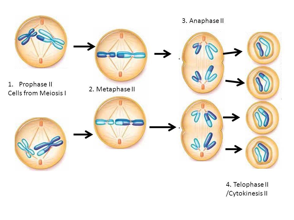 Cell biology  Wikipedia