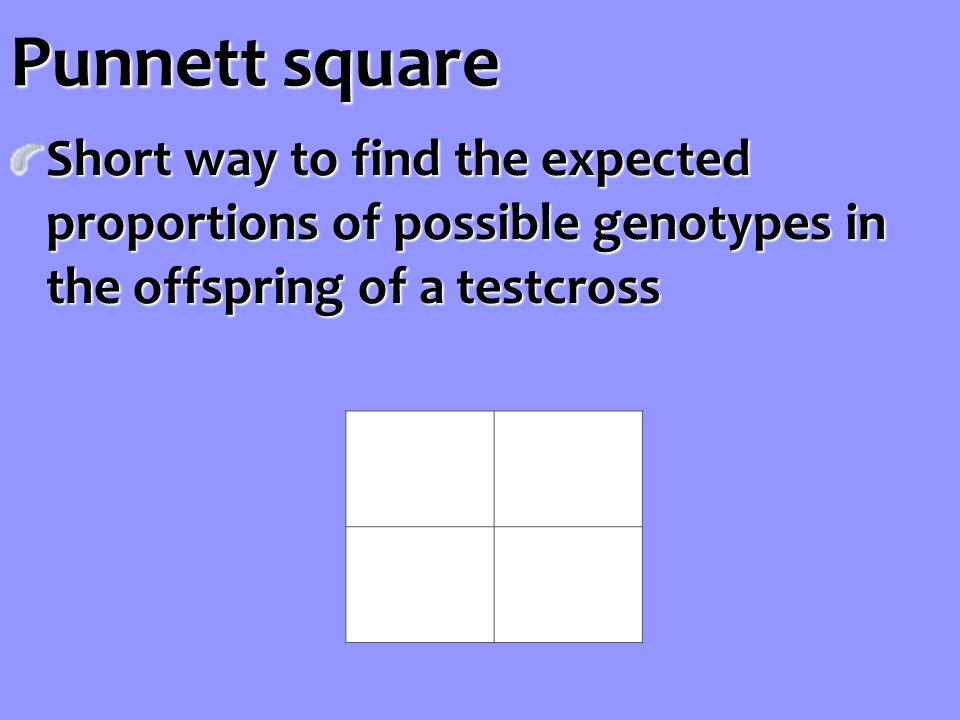 Punnett square Short way to find the expected proportions of possible genotypes in the offspring of a testcross