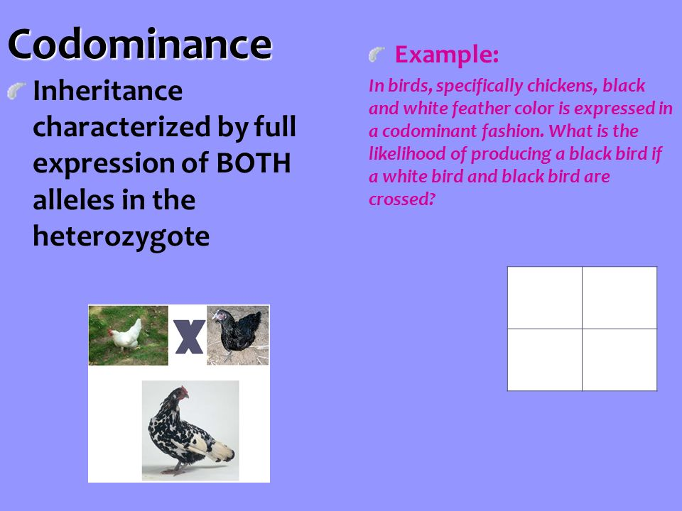 Codominance Inheritance characterized by full expression of BOTH alleles in the heterozygote Example: In birds, specifically chickens, black and white feather color is expressed in a codominant fashion.