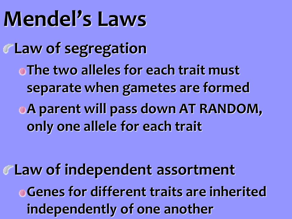 Mendel's Laws Law of segregation The two alleles for each trait must separate when gametes are formed A parent will pass down AT RANDOM, only one allele for each trait Law of independent assortment Genes for different traits are inherited independently of one another