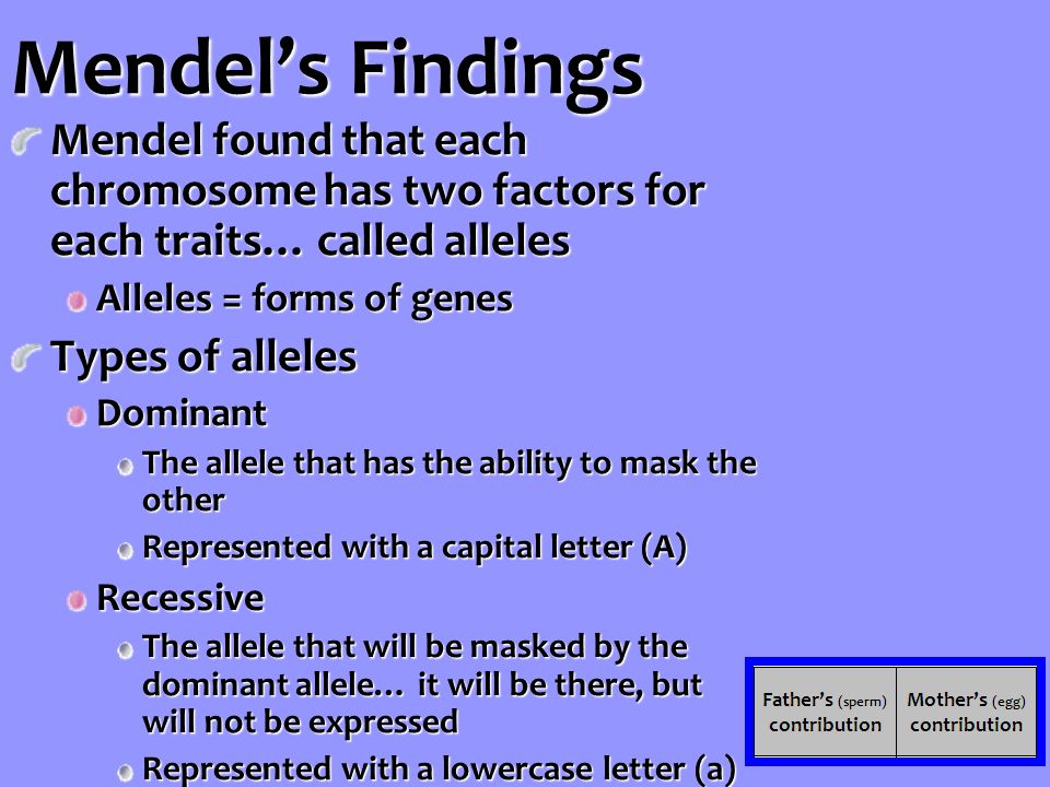 Mendel's Findings Mendel found that each chromosome has two factors for each traits… called alleles Alleles = forms of genes Types of alleles Dominant The allele that has the ability to mask the other Represented with a capital letter (A) Recessive The allele that will be masked by the dominant allele… it will be there, but will not be expressed Represented with a lowercase letter (a)