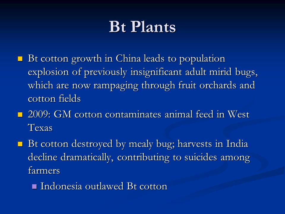 Bt Plants Bt cotton growth in China leads to population explosion of previously insignificant adult mirid bugs, which are now rampaging through fruit orchards and cotton fields Bt cotton growth in China leads to population explosion of previously insignificant adult mirid bugs, which are now rampaging through fruit orchards and cotton fields 2009: GM cotton contaminates animal feed in West Texas 2009: GM cotton contaminates animal feed in West Texas Bt cotton destroyed by mealy bug; harvests in India decline dramatically, contributing to suicides among farmers Bt cotton destroyed by mealy bug; harvests in India decline dramatically, contributing to suicides among farmers Indonesia outlawed Bt cotton Indonesia outlawed Bt cotton