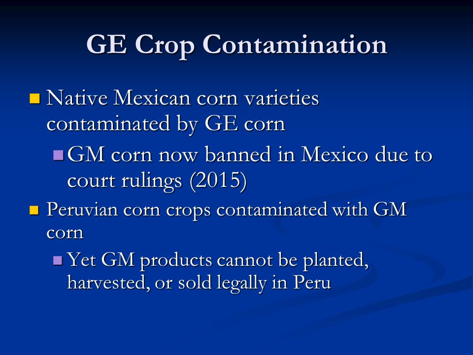 GE Crop Contamination Native Mexican corn varieties contaminated by GE corn Native Mexican corn varieties contaminated by GE corn GM corn now banned in Mexico due to court rulings (2015) GM corn now banned in Mexico due to court rulings (2015) Peruvian corn crops contaminated with GM corn Peruvian corn crops contaminated with GM corn Yet GM products cannot be planted, harvested, or sold legally in Peru Yet GM products cannot be planted, harvested, or sold legally in Peru
