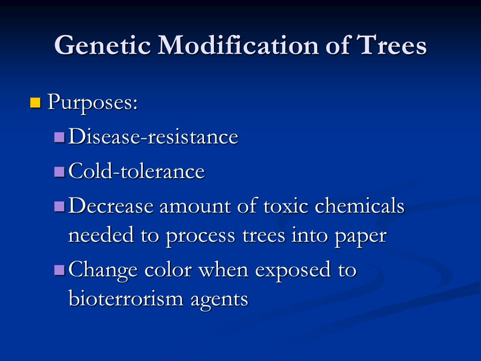 Genetic Modification of Trees Purposes: Purposes: Disease-resistance Disease-resistance Cold-tolerance Cold-tolerance Decrease amount of toxic chemicals needed to process trees into paper Decrease amount of toxic chemicals needed to process trees into paper Change color when exposed to bioterrorism agents Change color when exposed to bioterrorism agents