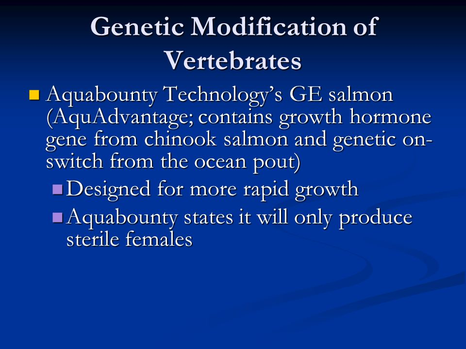 Genetic Modification of Vertebrates Aquabounty Technology's GE salmon (AquAdvantage; contains growth hormone gene from chinook salmon and genetic on- switch from the ocean pout) Aquabounty Technology's GE salmon (AquAdvantage; contains growth hormone gene from chinook salmon and genetic on- switch from the ocean pout) Designed for more rapid growth Designed for more rapid growth Aquabounty states it will only produce sterile females Aquabounty states it will only produce sterile females