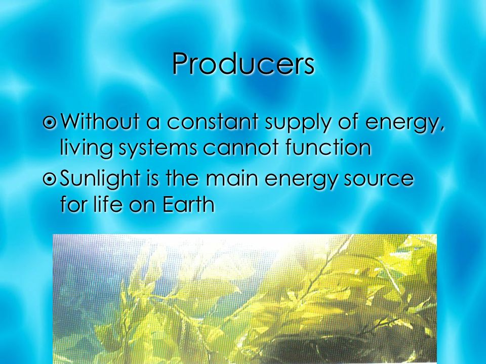 Producers  Without a constant supply of energy, living systems cannot function  Sunlight is the main energy source for life on Earth  Without a constant supply of energy, living systems cannot function  Sunlight is the main energy source for life on Earth