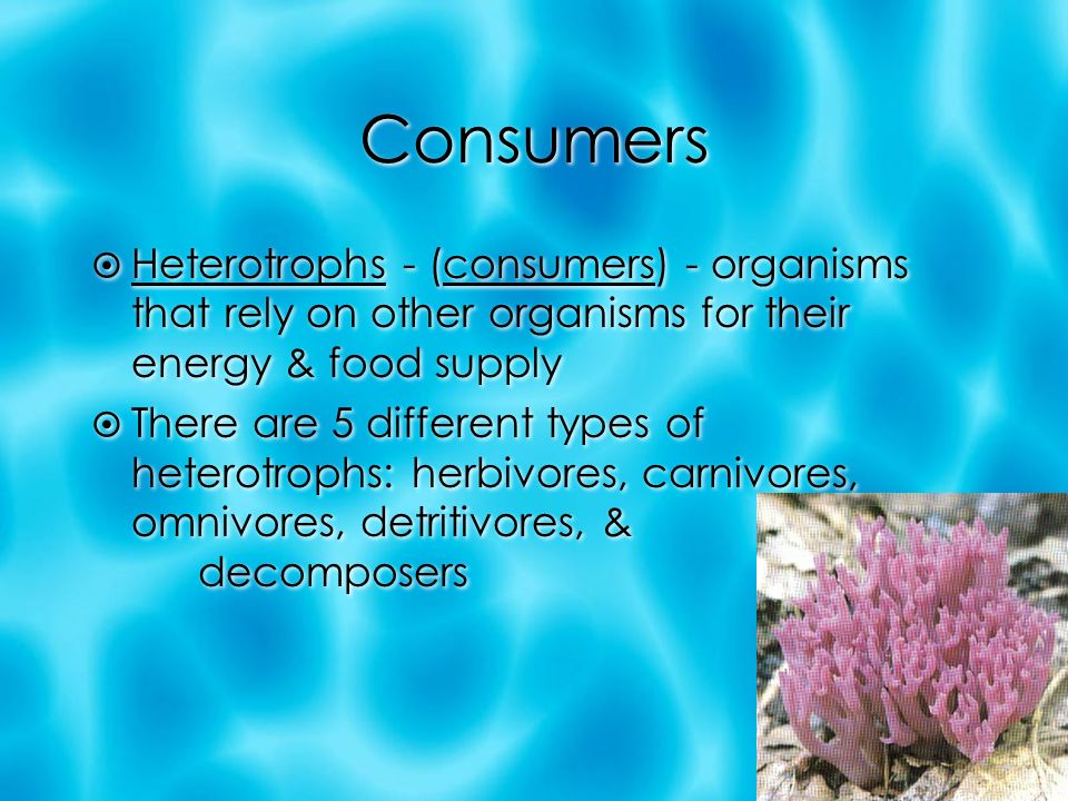 Consumers  Heterotrophs - (consumers) - organisms that rely on other organisms for their energy & food supply  There are 5 different types of heterotrophs: herbivores, carnivores, omnivores, detritivores, & decomposers  Heterotrophs - (consumers) - organisms that rely on other organisms for their energy & food supply  There are 5 different types of heterotrophs: herbivores, carnivores, omnivores, detritivores, & decomposers