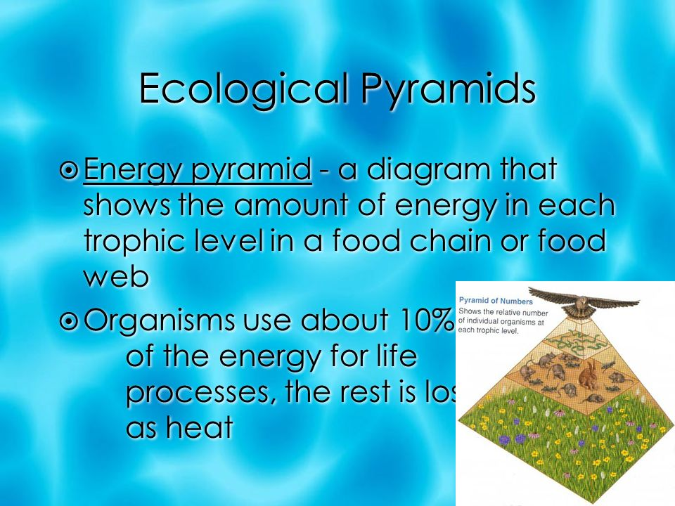 Ecological Pyramids  Energy pyramid - a diagram that shows the amount of energy in each trophic level in a food chain or food web  Organisms use about 10% of the energy for life processes, the rest is lost as heat  Energy pyramid - a diagram that shows the amount of energy in each trophic level in a food chain or food web  Organisms use about 10% of the energy for life processes, the rest is lost as heat