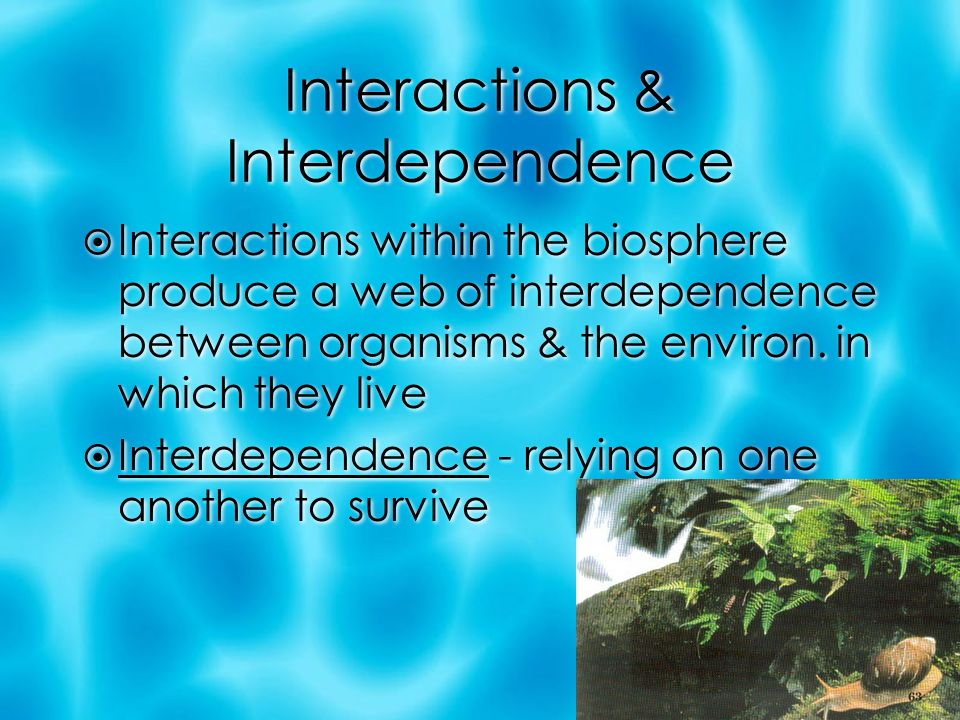 Interactions & Interdependence  Interactions within the biosphere produce a web of interdependence between organisms & the environ.