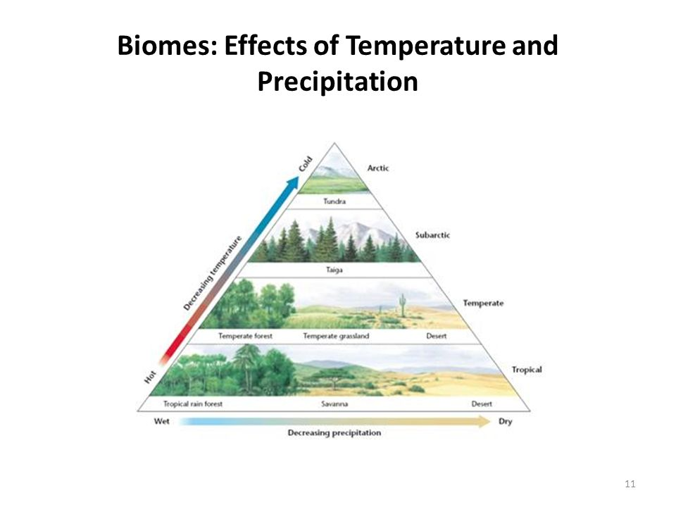 Biomes: Effects of Temperature and Precipitation 11