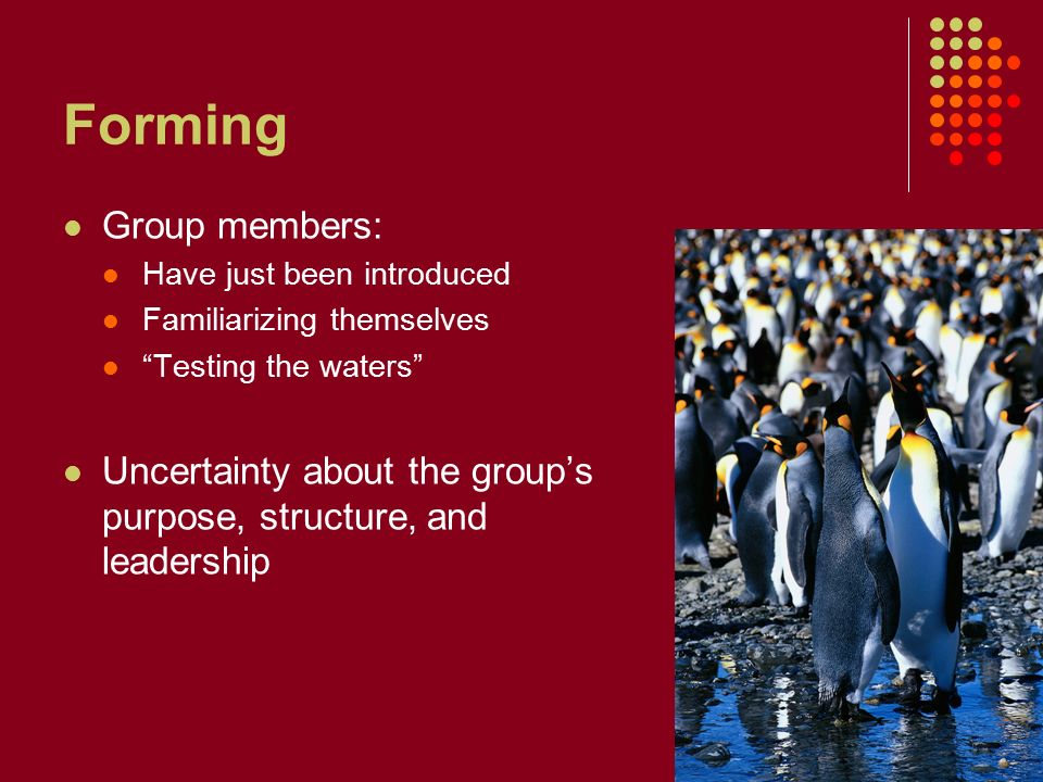 Forming Group members: Have just been introduced Familiarizing themselves Testing the waters Uncertainty about the group's purpose, structure, and leadership