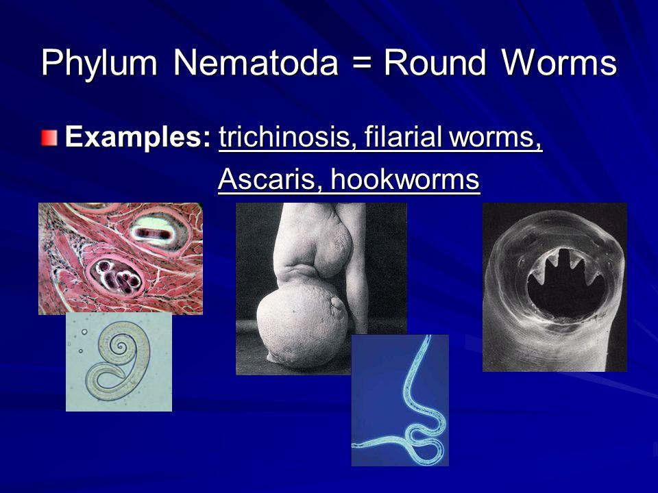 The Worms Phylum Platyhelminthes Phylum Nematoda Phylum Annelida
