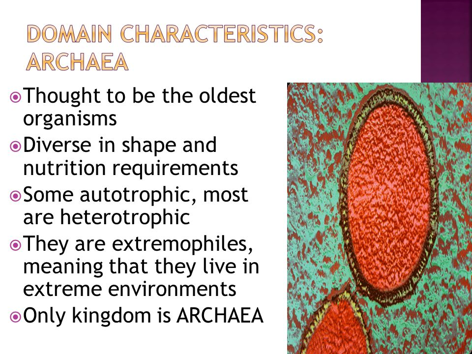  Thought to be the oldest organisms  Diverse in shape and nutrition requirements  Some autotrophic, most are heterotrophic  They are extremophiles, meaning that they live in extreme environments  Only kingdom is ARCHAEA