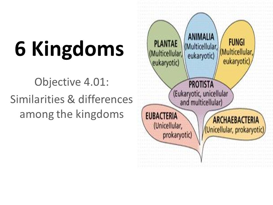 6 Kingdoms Objective 4.01: Similarities & differences among the kingdoms