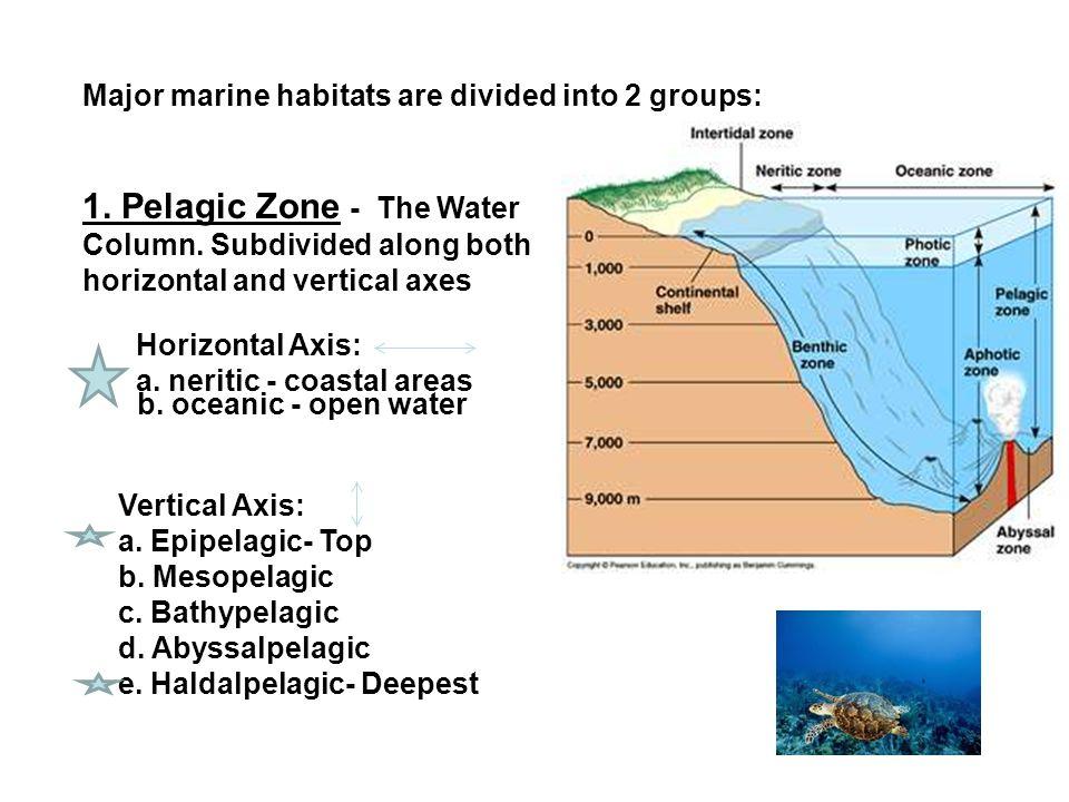 Major Ocean Zones Diagram Wiring Library