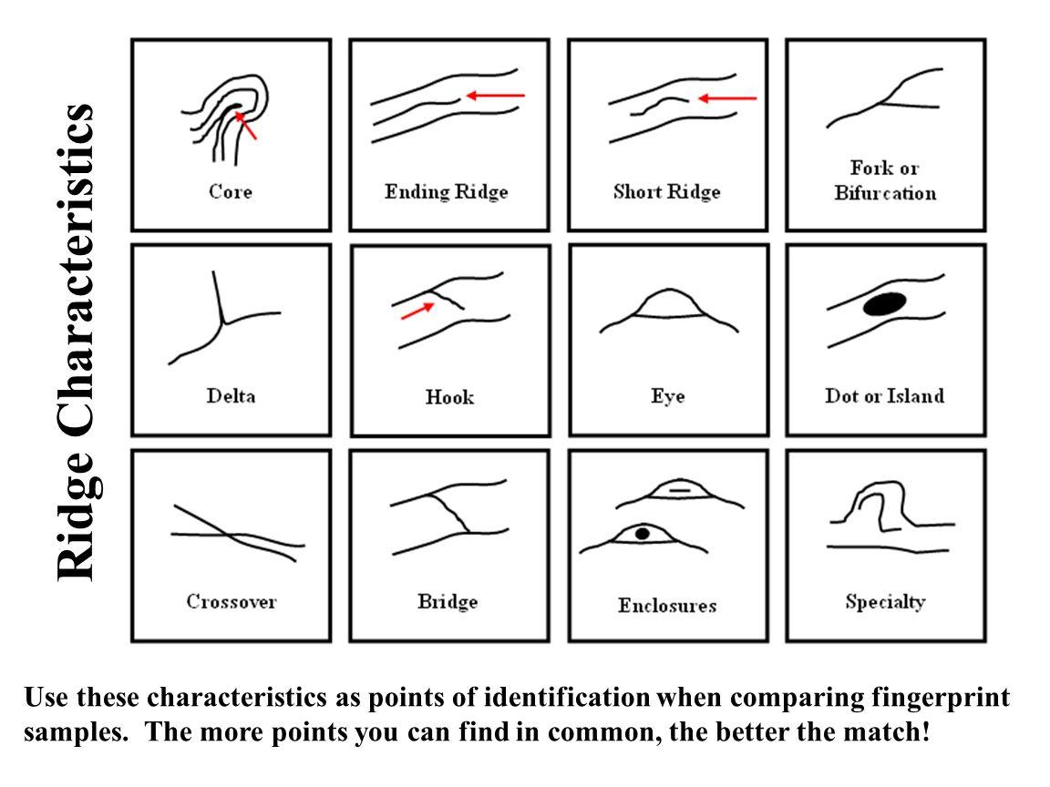 8 th Grade Forensic Science A Closer Look at Fingerprints Image ...